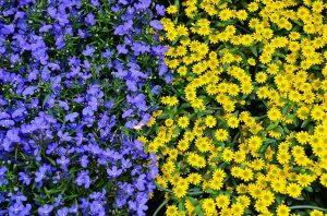 Blumen aus Debrecen