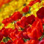 Blumenkarneval in Debrecen
